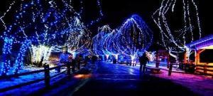 san diego christmas lights tour