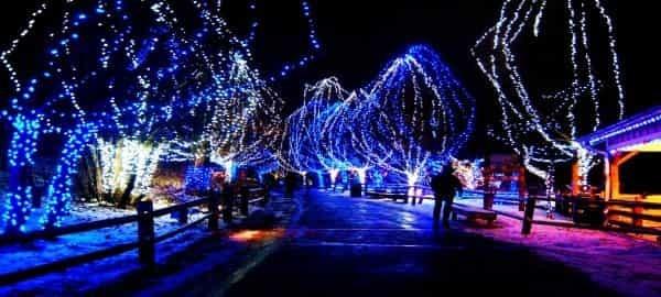 san diego christmas lights tour and Holiday Cheer...